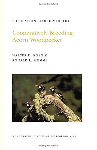 Population Ecology of the Cooperatively Breeding Acorn Woodpecker. (MPB-24) (Monographs in Population Biology) - Walter D. Koenig; Ronald L. Mumme
